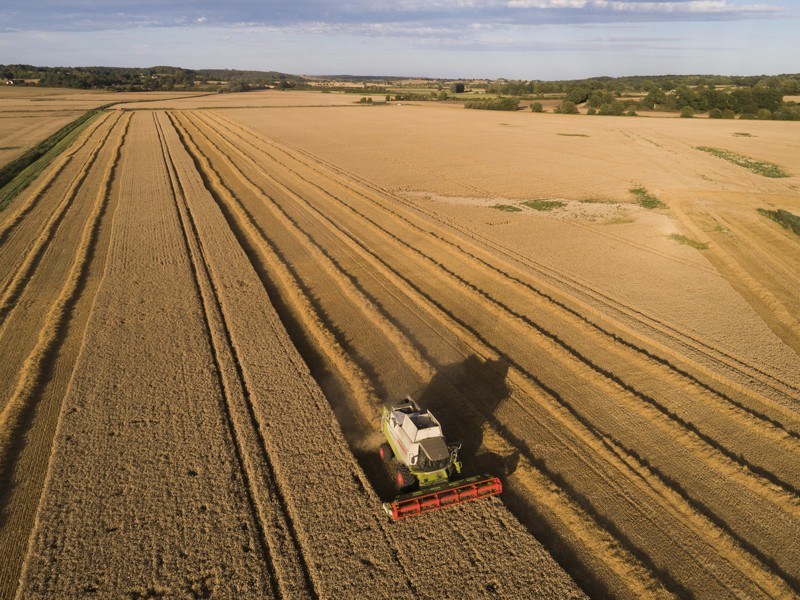A Lexion combine harvester drives through a field of wheat